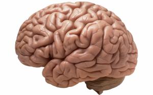 brain-990x622-300x188.png